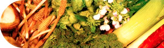 京都大原で育つ有機野菜